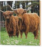 Scottish Highland Cows Wood Print
