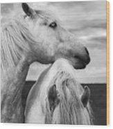 Scottish Horses Wood Print