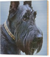 Scottish Terrier Dog Wood Print