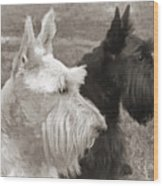 Scottish Terrier Dogs In Sepia Wood Print