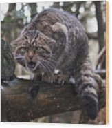 Scottish Wildcat Wood Print