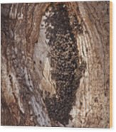 Scotty's Bees Wood Print