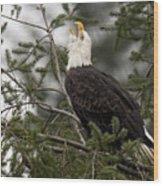 Screamin Eagle Wood Print