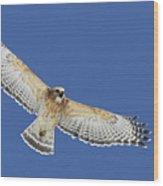 Screaming Hawk Wood Print