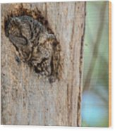 Screech Owl In A Tree Wood Print