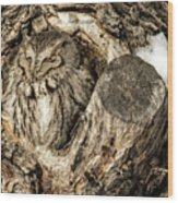Screech Owl In Cavity Nest Wood Print
