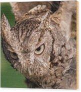Screech Owl In Flight Wood Print