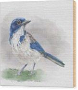 Scrub Jay Wood Print