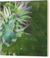Sea Anemone And Kelp  Wood Print