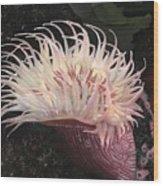 Sea Anemone Wood Print by Charles Parks
