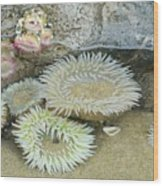 Sea Anemones Wood Print