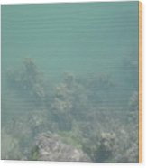 Sea Bed Wood Print