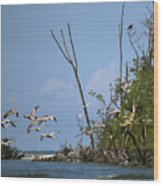 Sea Bird Flight Wood Print