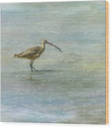 Sea Bird Wood Print