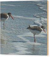 Sea Birds #2 Wood Print