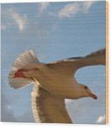 Sea Birds 9 Wood Print