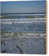 Sea Birds Feeding On Florida Coast Dsc00473_16 Wood Print