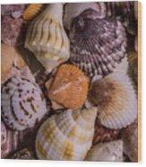 Sea Bones 19 Wood Print