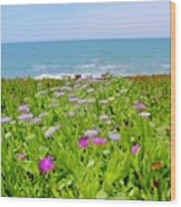 Sea Daisy Trail Wood Print