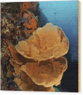 Sea Fan Coral - Indonesia Wood Print