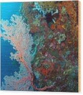 Sea Fan Wood Print