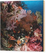 Sea Fans And Soft Coral, Fiji Wood Print