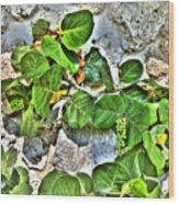 Sea Grapes  Wood Print