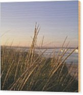 Sea Grass Overlooking The Harbor Wood Print