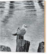 Sea Gull Black And White Wood Print