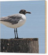 Sea Gull Wood Print