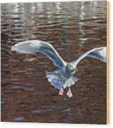 Sea Gull Landing Wood Print