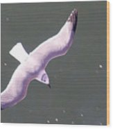 Sea Gull Offshore Wood Print