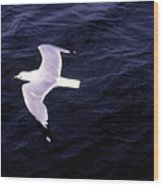 Sea Gull Over Water Dbwc Wood Print