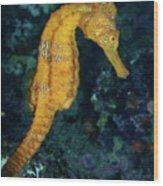 Sea Horse Underwater View Wood Print
