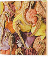 Sea Horses And Sea Shells Wood Print