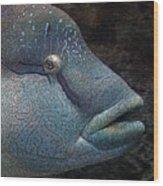 Sea Life 19 Wood Print