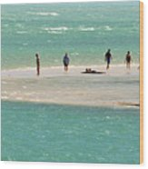 Sea Life Salt Life Key West Style  Wood Print