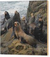Sea Lion Chorus Wood Print