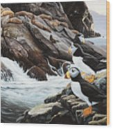 Sea Lion Island-puffins Wood Print