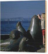 Sea Lion Sculpture  Wood Print