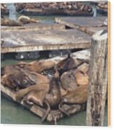 Sea Lions And Seagull Wood Print