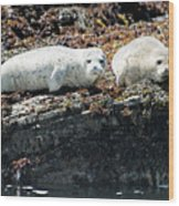 Sea Lions At Sea Lion Cove State Marine Conservation Area Wood Print