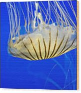 Sea Nettle Wood Print