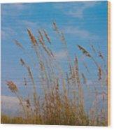 Sea Oats 2 - Destin Wood Print