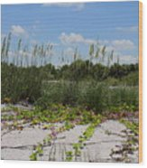 Sea Oats And Blooming Cross Vine Wood Print