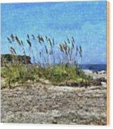 Sea Oats And Coastline Wood Print