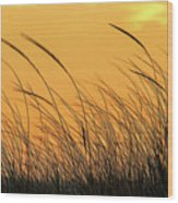 Sea Oats At Dusk Wood Print