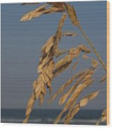 Sea Oats At Hunting Island State Park Wood Print