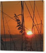Sea Oats At Sunset Wood Print