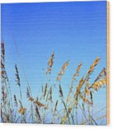 Sea Oats Atlantic Ocean Wood Print